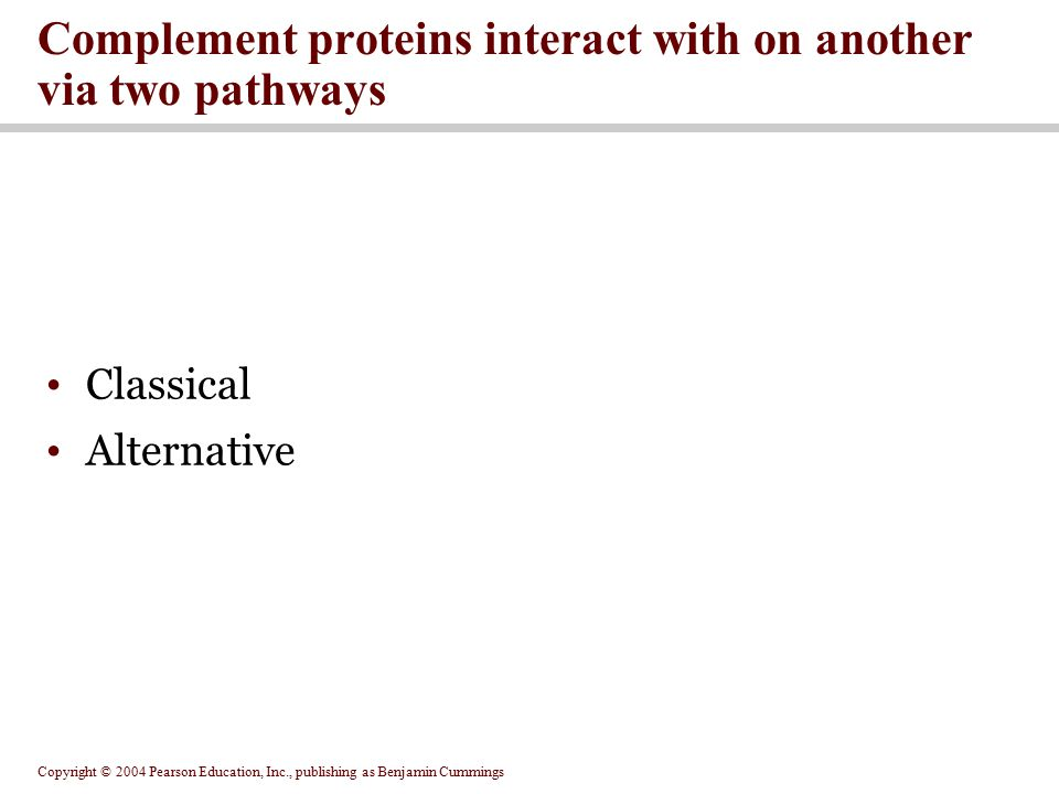 Complement proteins interact with on another via two pathways