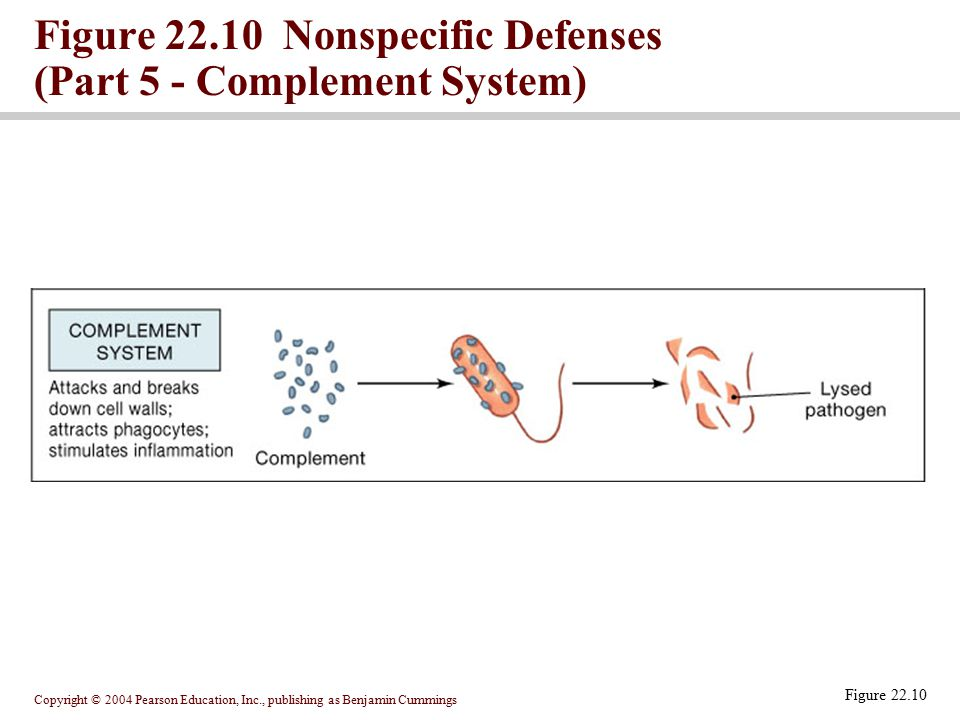 Figure 22.10 Nonspecific Defenses (Part 5 - Complement System)
