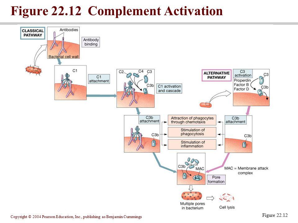 Figure 22.12 Complement Activation
