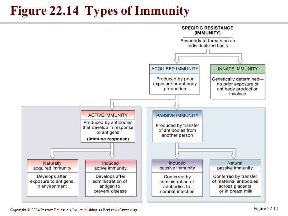 Figure 22.14 Types of Immunity