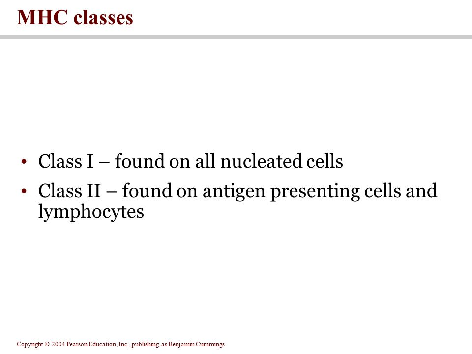 MHC classes Class I – found on all nucleated cells