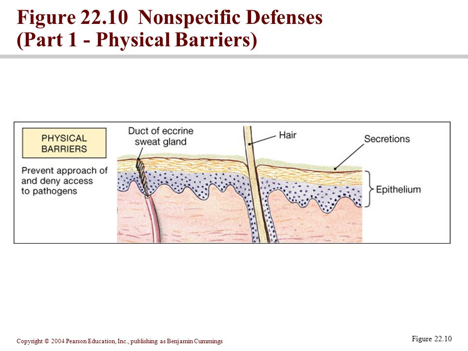 Figure 22.10 Nonspecific Defenses (Part 1 - Physical Barriers)
