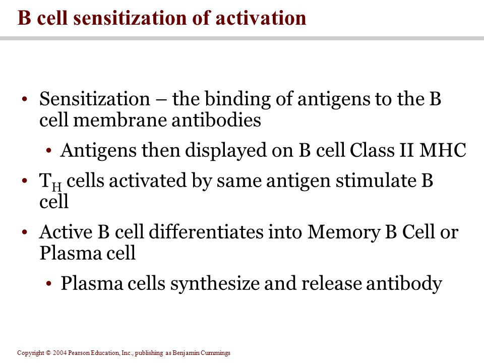 B cell sensitization of activation