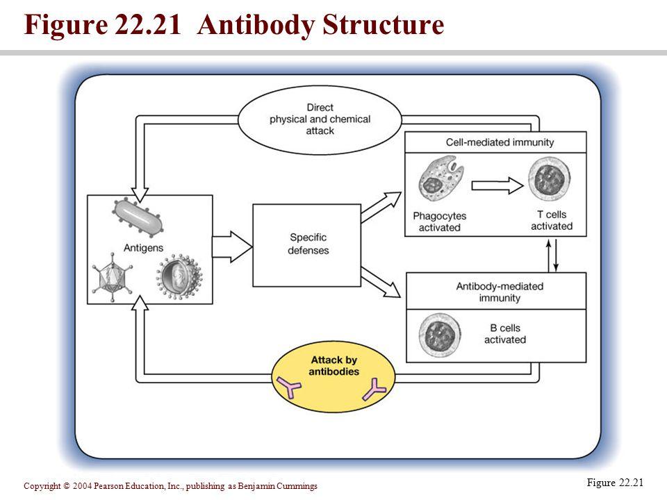Figure 22.21 Antibody Structure