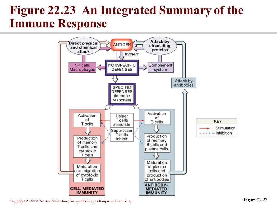 Figure 22.23 An Integrated Summary of the Immune Response