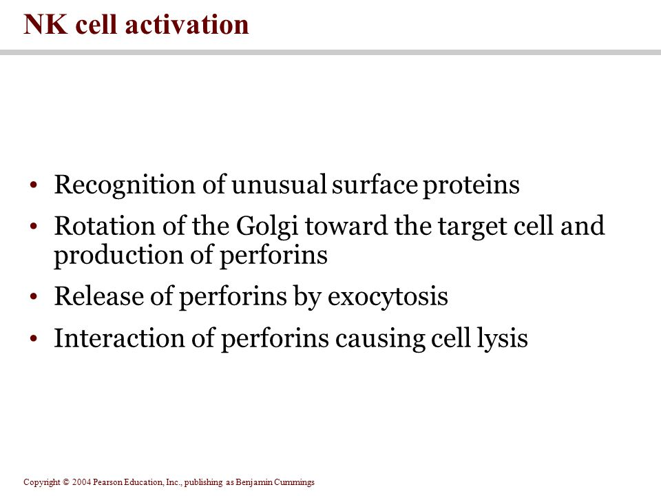 NK cell activation Recognition of unusual surface proteins