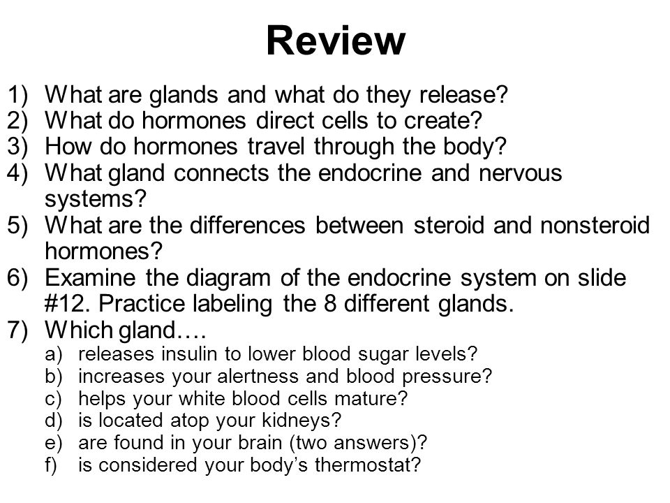 Review What are glands and what do they release