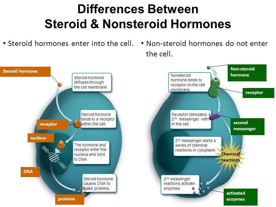 Steroid & Nonsteroid Hormones