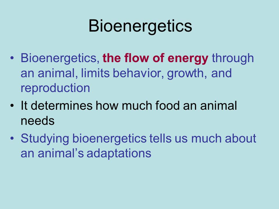 Bioenergetics Bioenergetics, the flow of energy through an animal, limits behavior, growth, and reproduction.