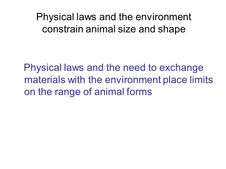 Physical laws and the environment constrain animal size and shape