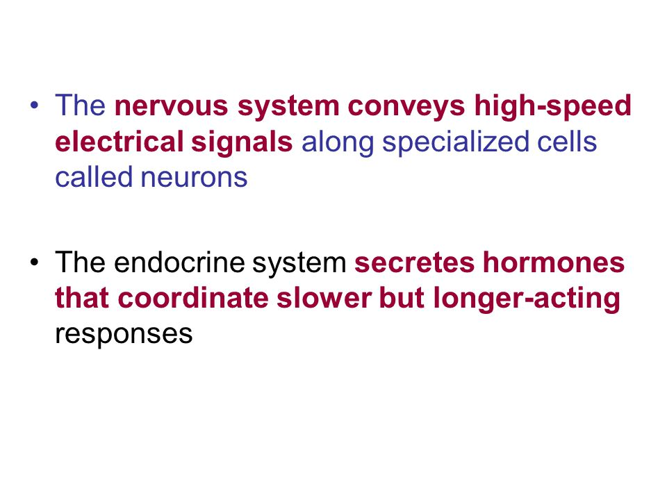 The nervous system conveys high-speed electrical signals along specialized cells called neurons