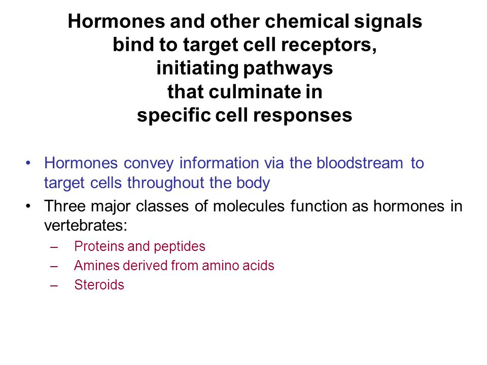 Hormones and other chemical signals bind to target cell receptors, initiating pathways that culminate in specific cell responses