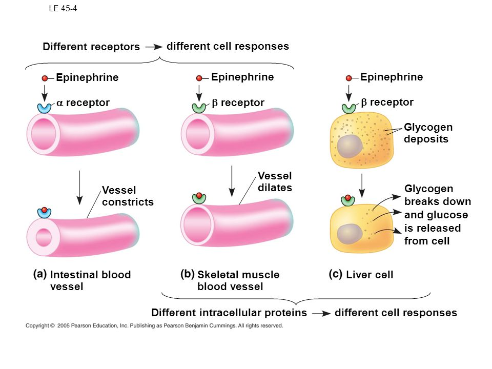 different cell responses