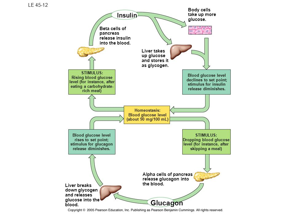 Glucagon Insulin LE 45-12 Body cells take up more glucose.