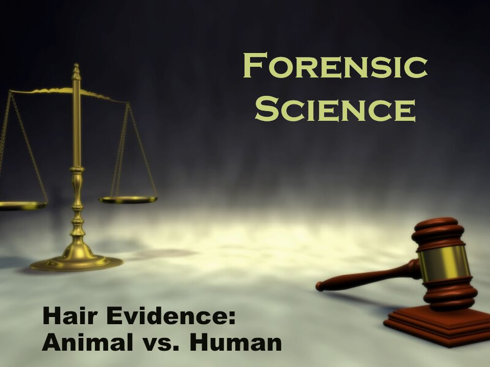 Hair Evidence: Animal vs. Human