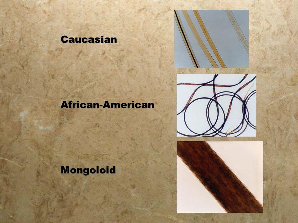 Caucasian African-American Mongoloid