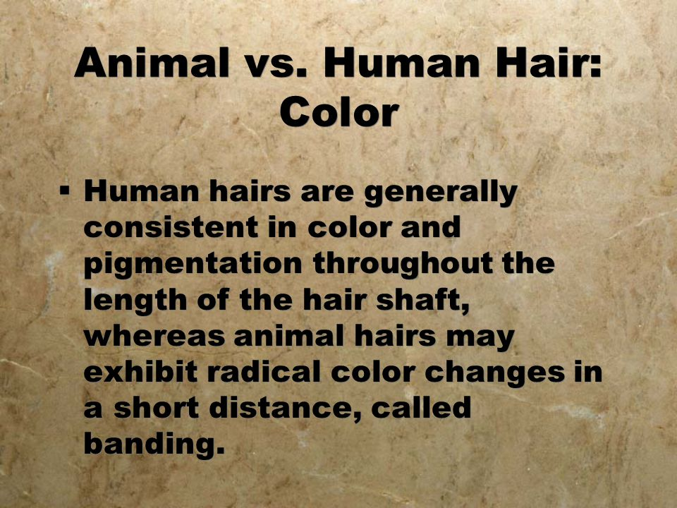Animal vs. Human Hair: Color