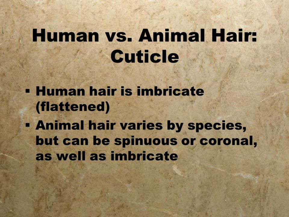 Human vs. Animal Hair: Cuticle