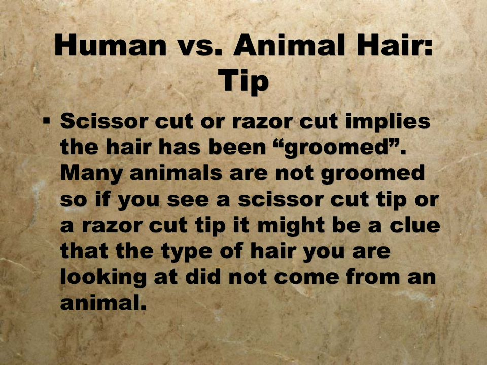 Human vs. Animal Hair: Tip