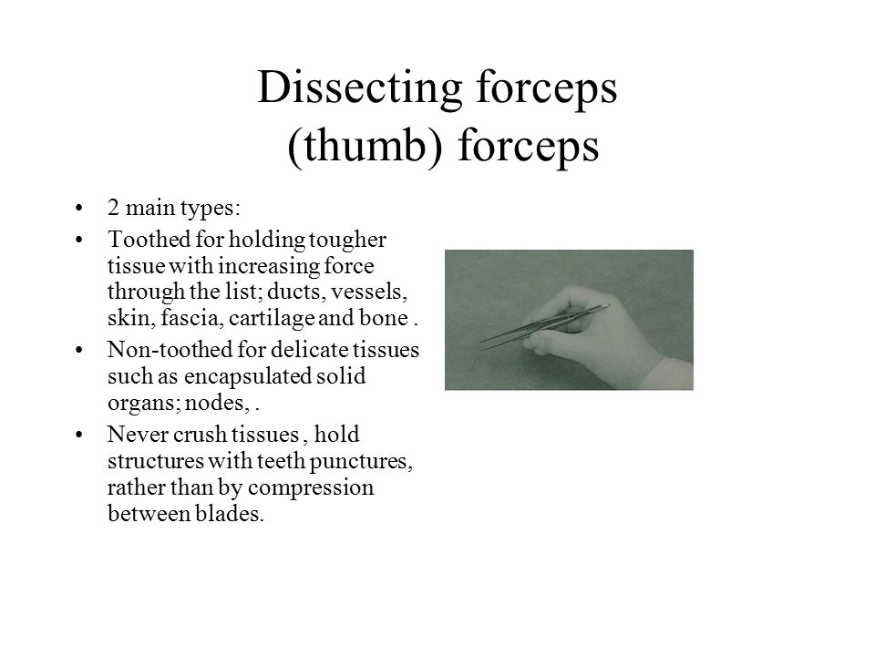 Dissecting forceps (thumb) forceps