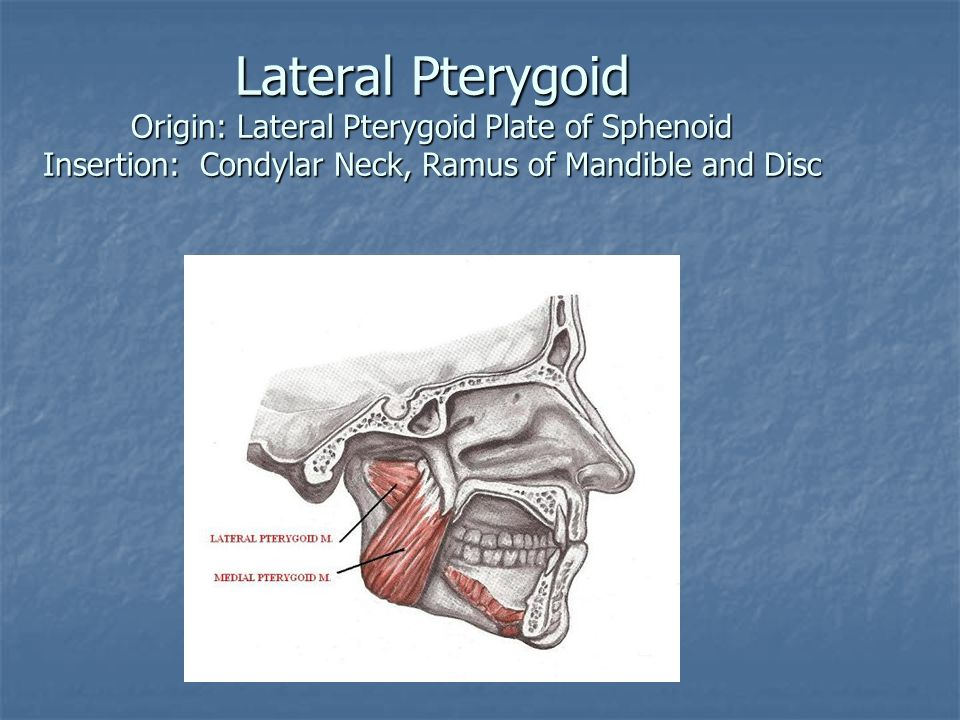 Lateral Pterygoid Origin: Lateral Pterygoid Plate of Sphenoid Insertion: Condylar Neck, Ramus of Mandible and Disc