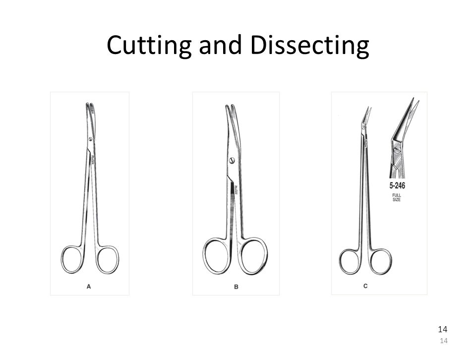Cutting and Dissecting