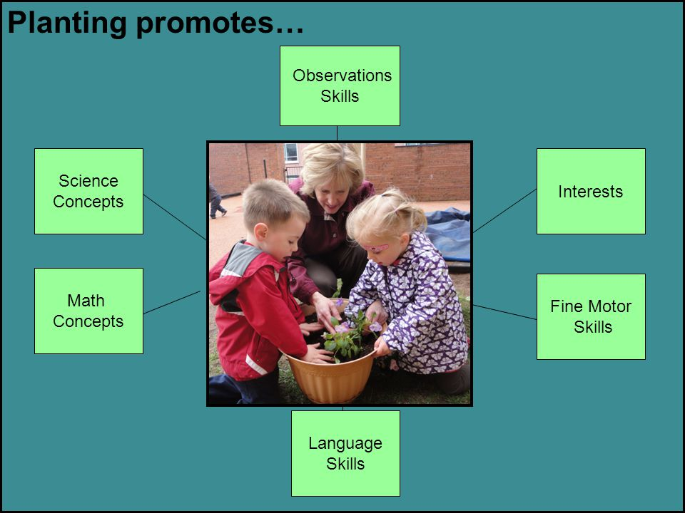 Planting promotes… Observations Skills Science Interests Concepts Math