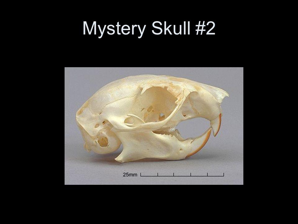 Mystery Skull #2