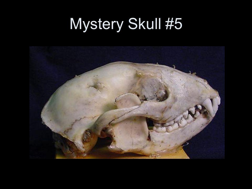 Mystery Skull #5
