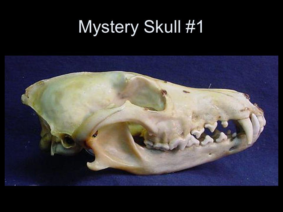 Mystery Skull #1