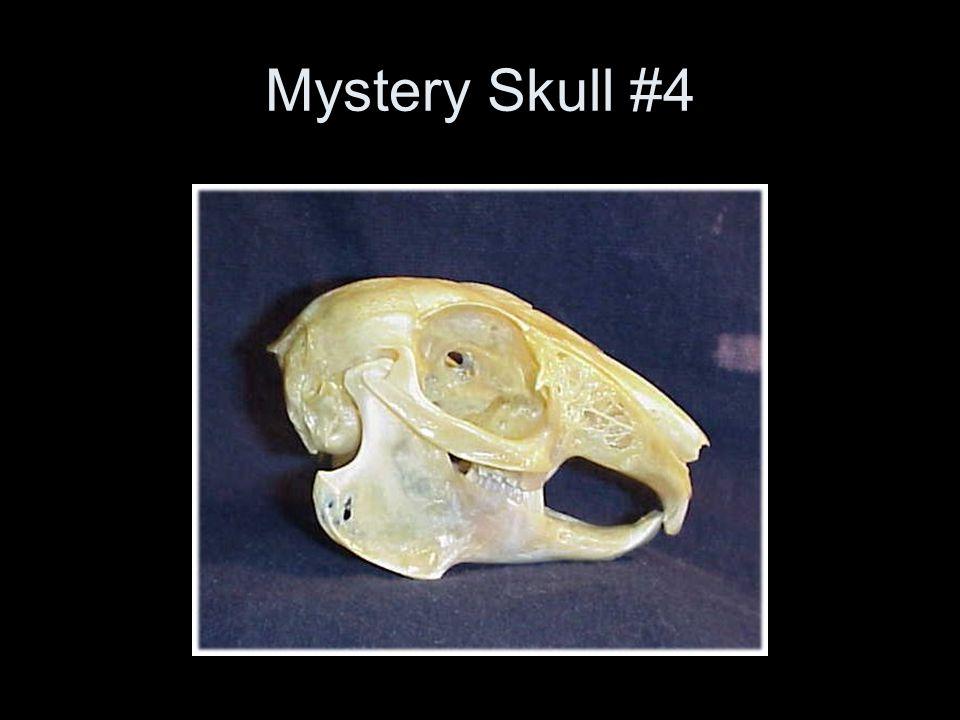 Mystery Skull #4