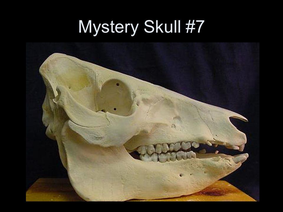 Mystery Skull #7
