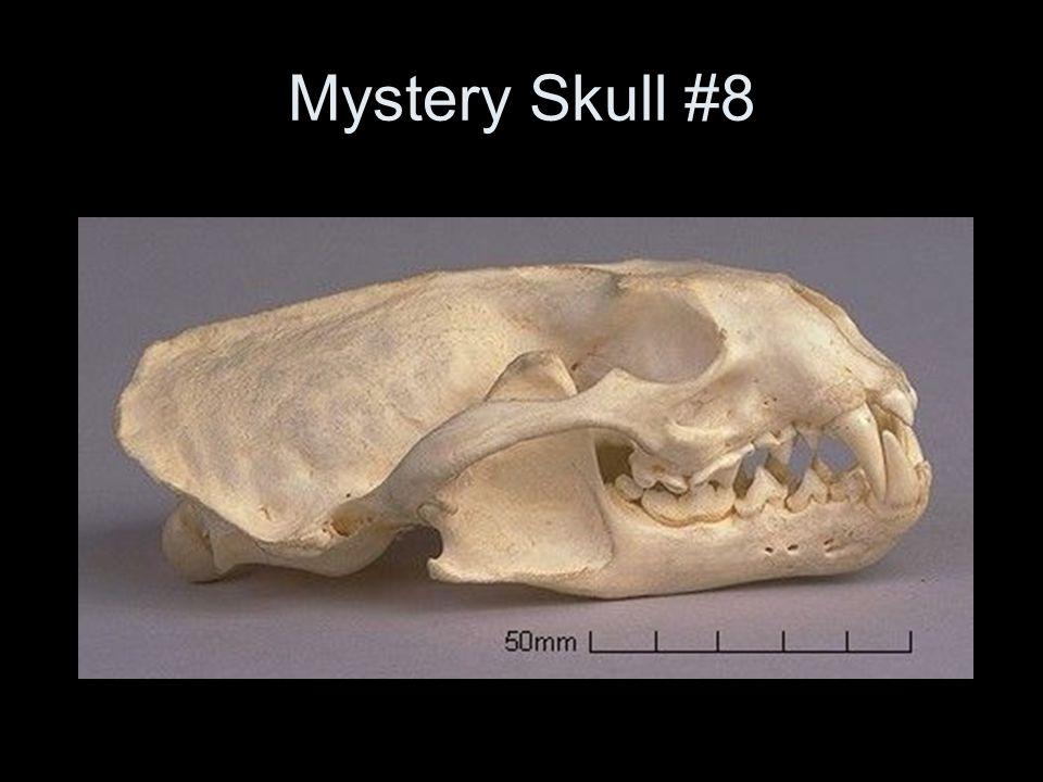Mystery Skull #8
