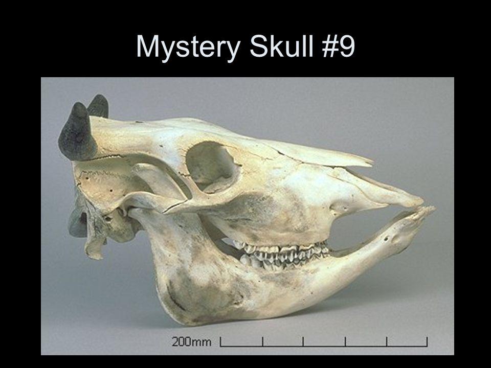 Mystery Skull #9