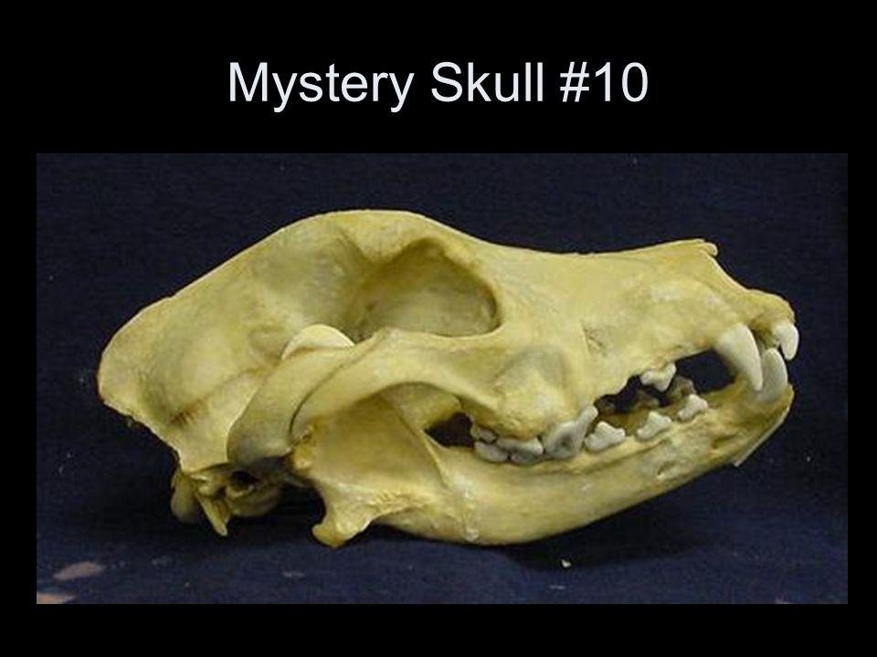 Mystery Skull #10