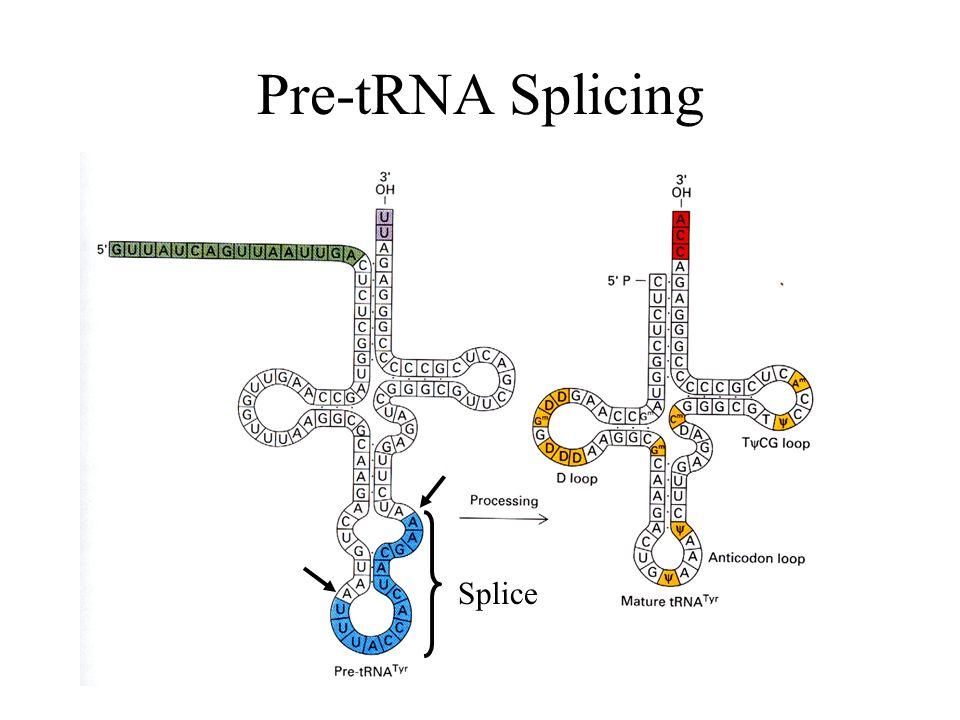 Pre-tRNA Splicing Splice