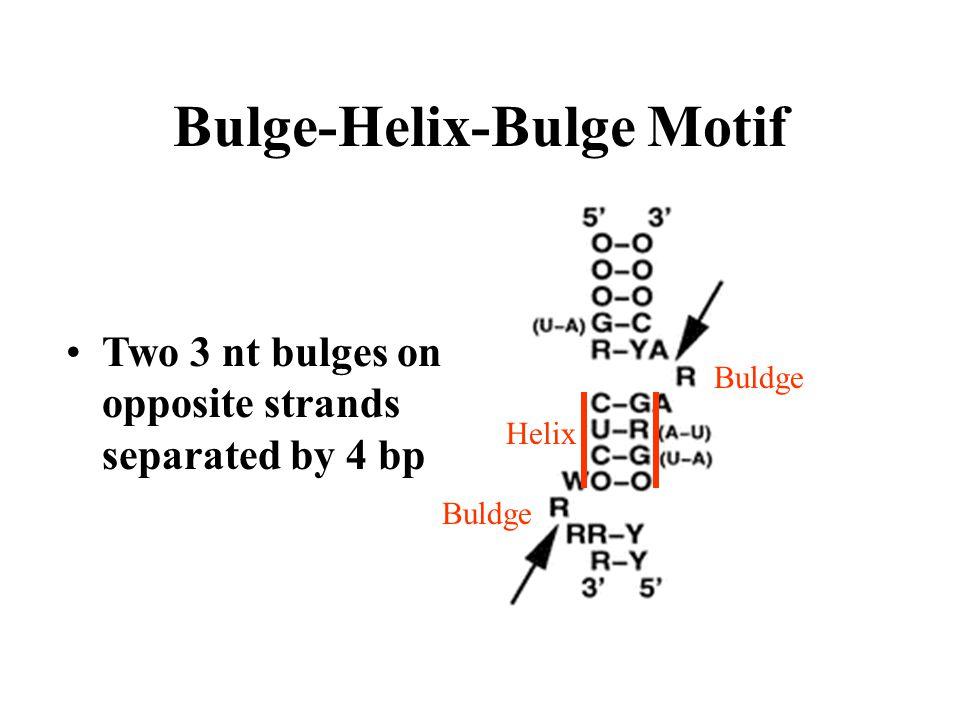 Bulge-Helix-Bulge Motif