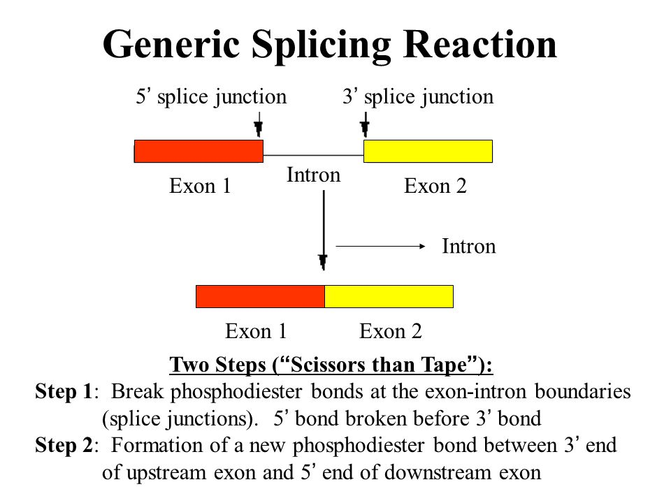 Generic Splicing Reaction