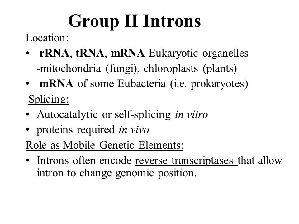 Group II Introns Location: rRNA, tRNA, mRNA Eukaryotic organelles
