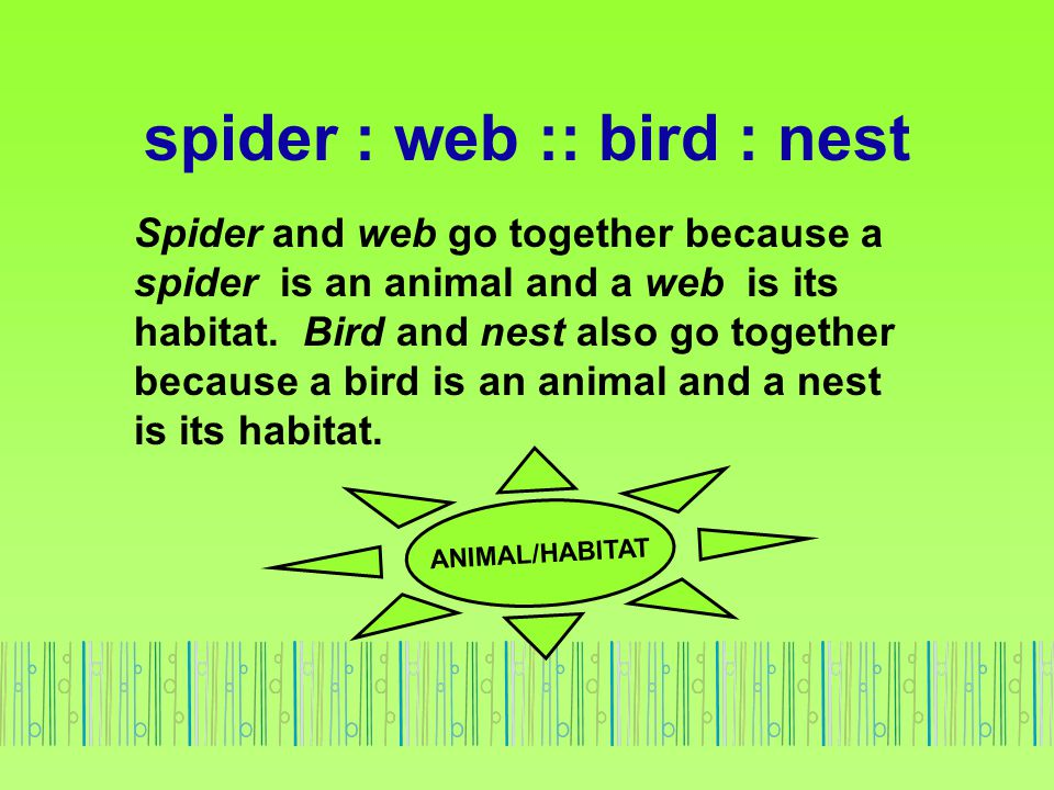 spider : web :: bird : nest