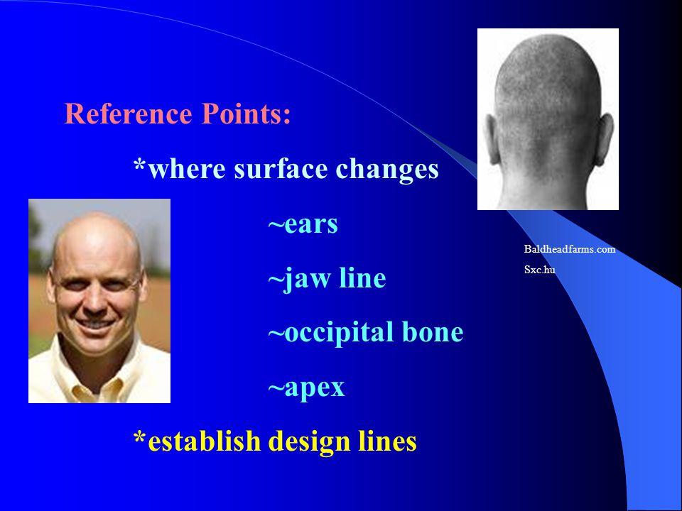 *where surface changes ~ears ~jaw line ~occipital bone ~apex