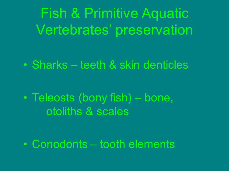 Fish & Primitive Aquatic Vertebrates' preservation