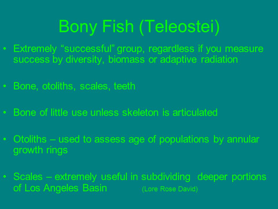 Bony Fish (Teleostei) Extremely successful group, regardless if you measure success by diversity, biomass or adaptive radiation.