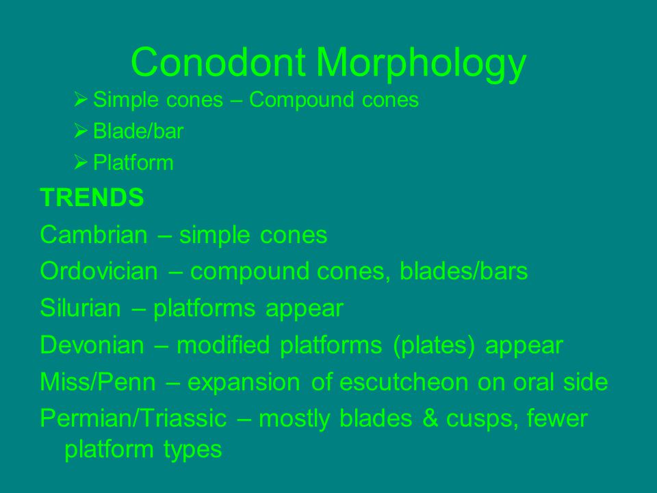 Conodont Morphology TRENDS Cambrian – simple cones