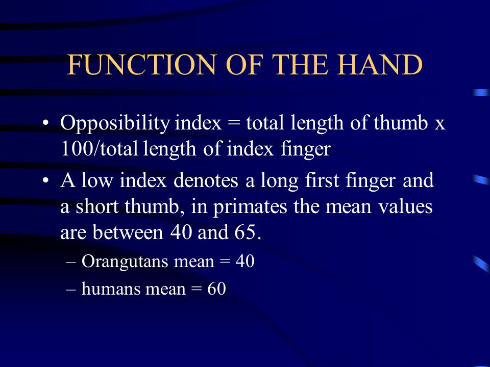 FUNCTION OF THE HAND Opposibility index = total length of thumb x 100/total length of index finger.