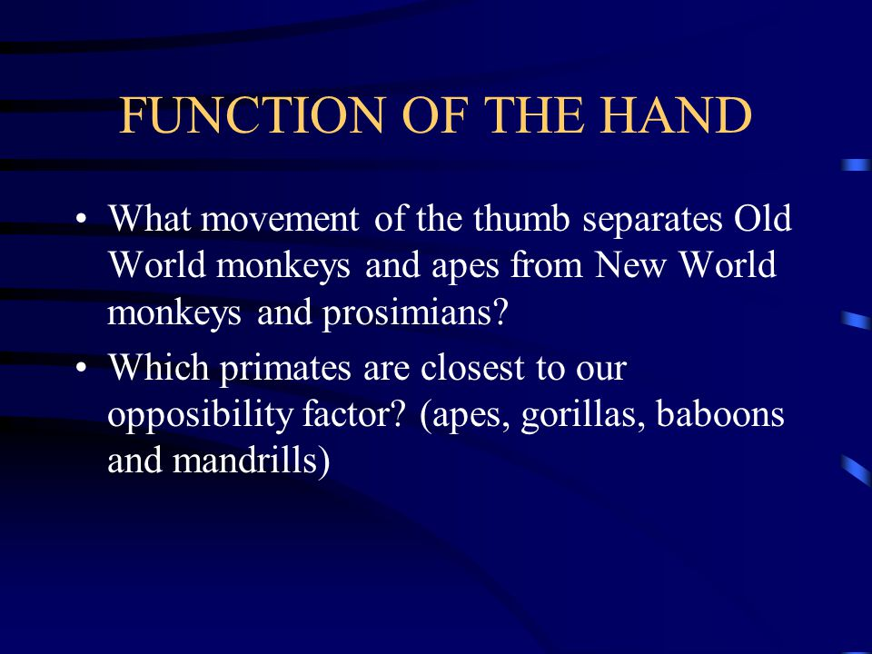 FUNCTION OF THE HAND What movement of the thumb separates Old World monkeys and apes from New World monkeys and prosimians