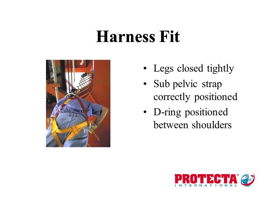 Harness Fit Harness Fit