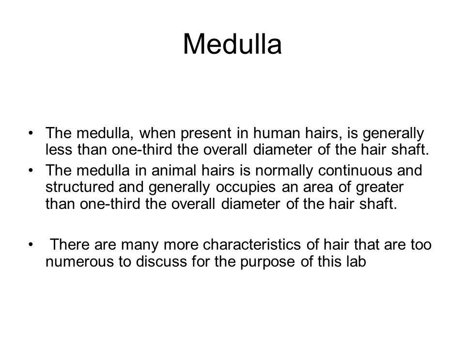 Medulla The medulla, when present in human hairs, is generally less than one-third the overall diameter of the hair shaft.