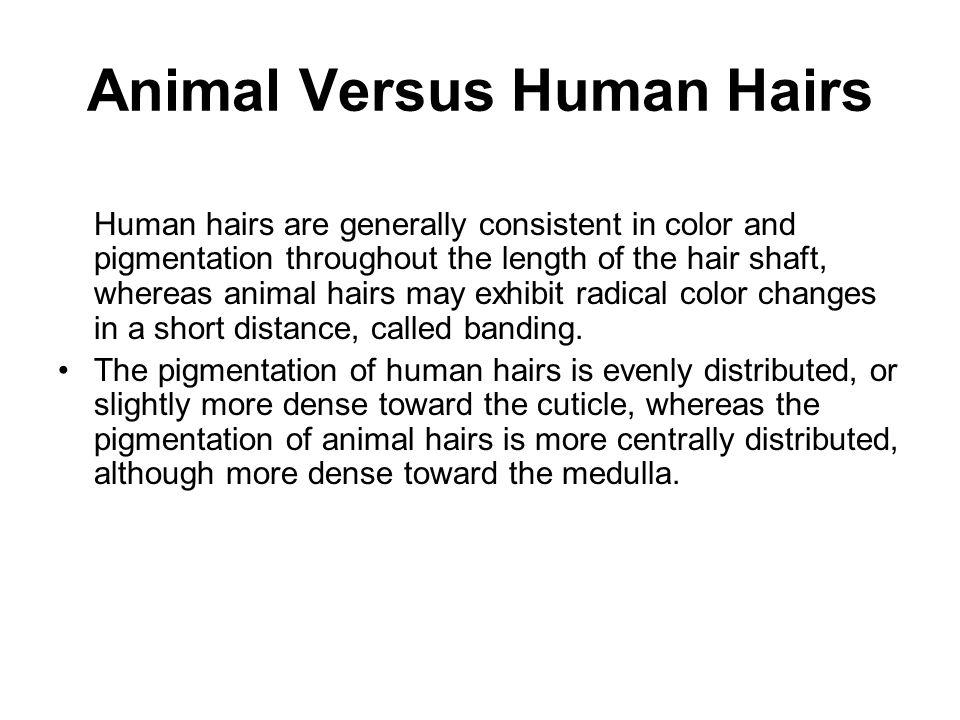 Animal Versus Human Hairs