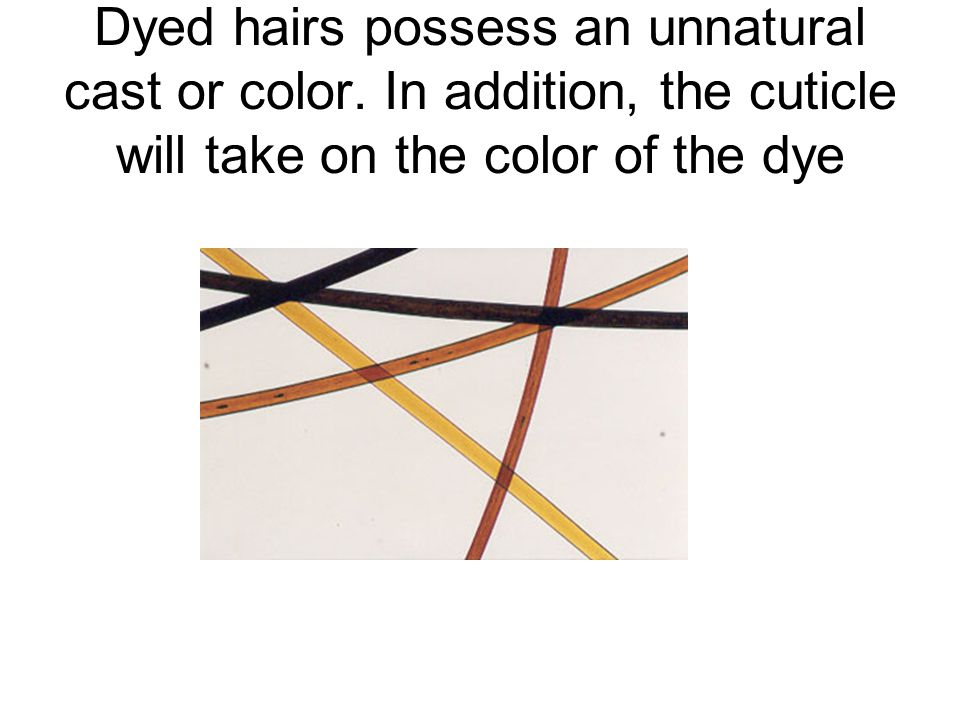 Dyed hairs possess an unnatural cast or color